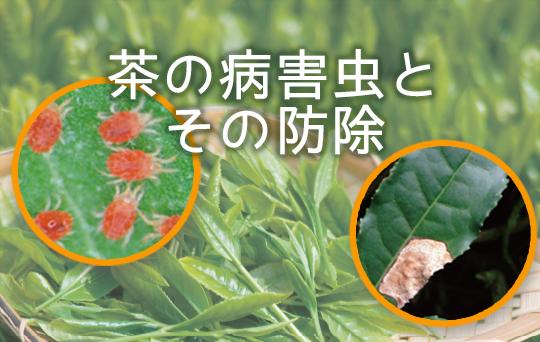 茶の病害虫とその防除